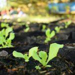 ATI Online Course on Urban Gardening