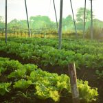 The Role of Expanded Consciousness in Sustainable Agriculture
