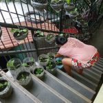 Growing Nutritious Food in Small Spaces for COVID Resiliency