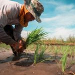 Philippine agriculture and COVID-19 impact